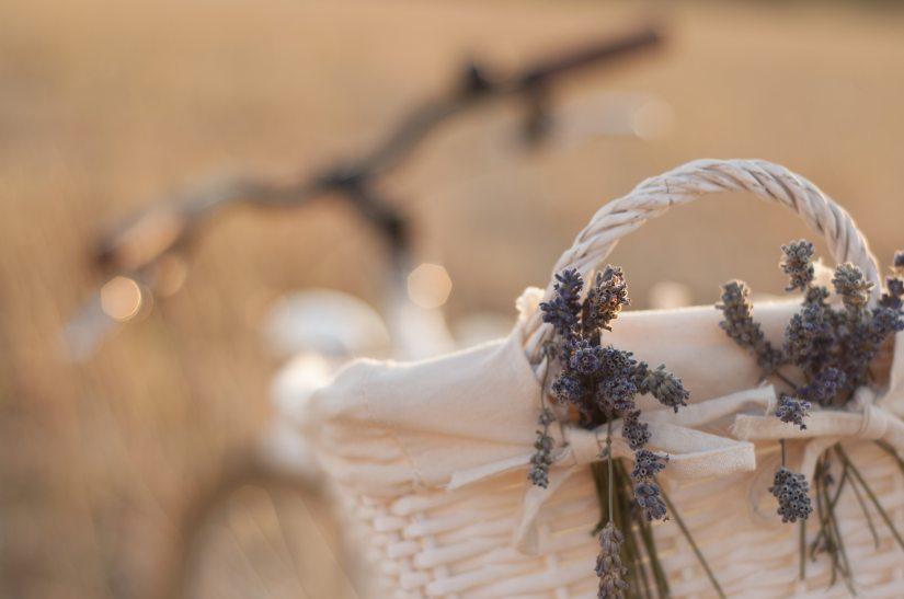 basket-bike-blur-462201 (1)