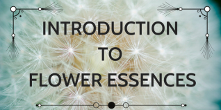 INTRO TO FLOWER ESSENCES